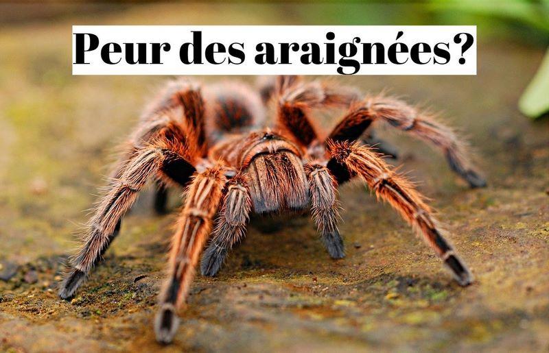 Comment vaincre la peur des araignées?
