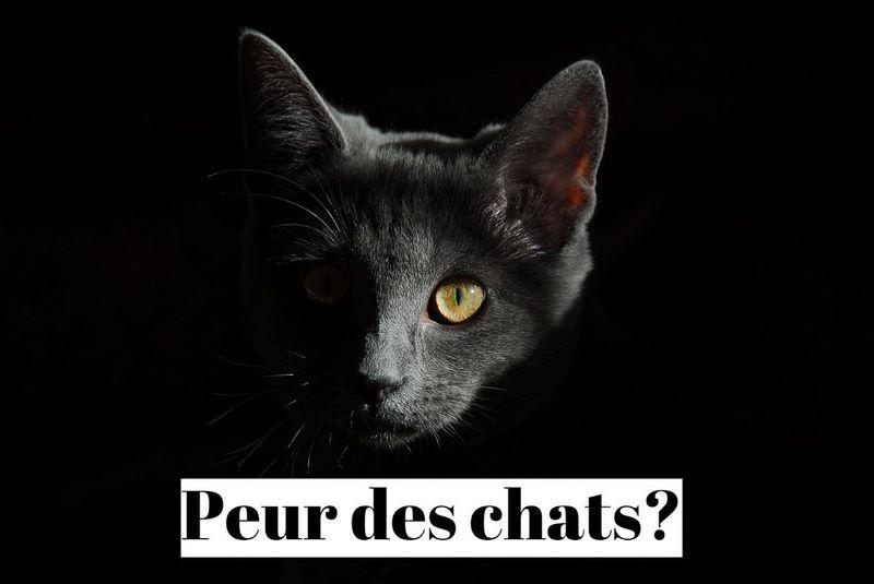 Comment vaincre la peur des chats (ailurophobie)?