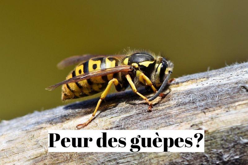 Comment surmonter sa phobie des guêpes (apiphobie)