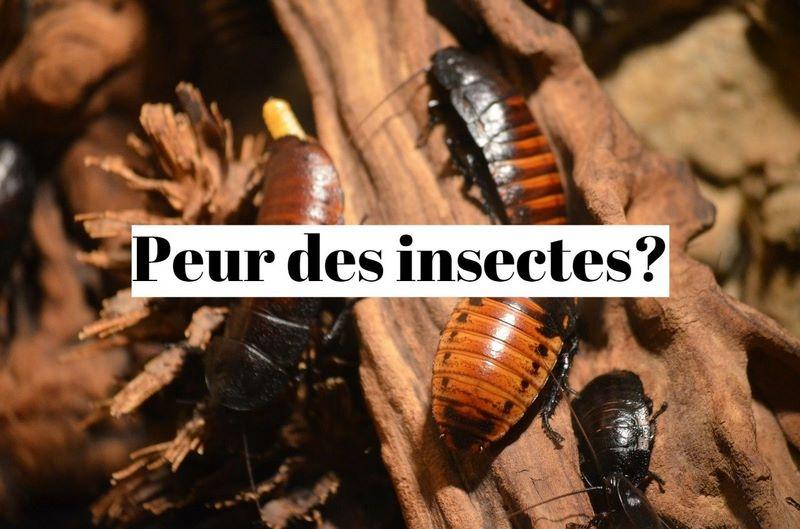 Comment vaincre sa peur des insectes (entomophobie)?