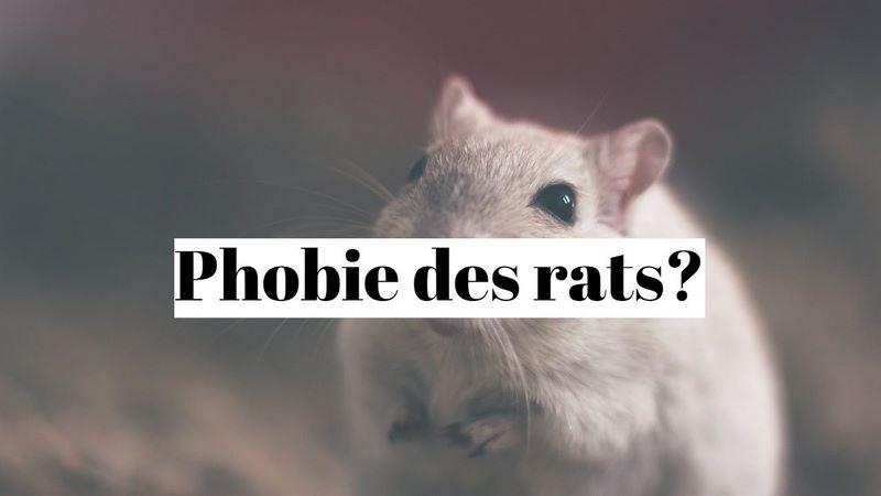 Comment guérir la phobie des rats (musophobie)?